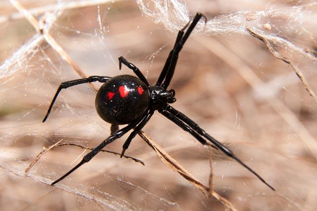 Spider Exterminators Santa Barbara CA