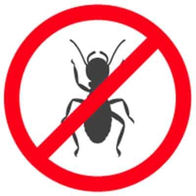 Ant Exterminators Santa Barbara CA