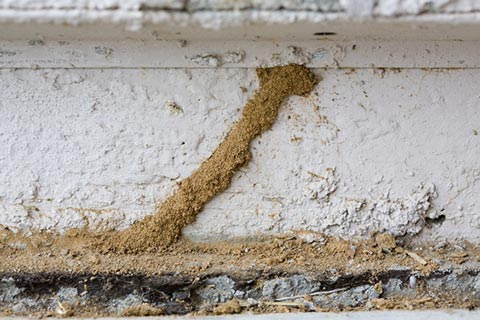 Termite Inspection Santa Barbara CA