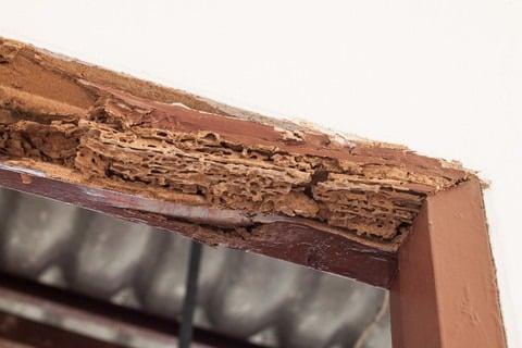 Termite Inspection Santa Barbara CA