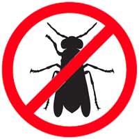 Wasp Exterminators Santa Barbara CA